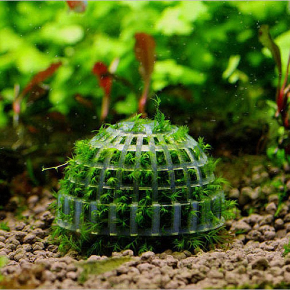 Aquarium Mineral Stone Suspended Float Moss Ball Fish Tank Aquascape  Crystal Red Shrimp Live Plant Cultivation Holder House In Decorations From  Home ...