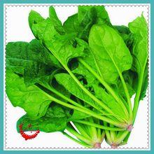 1 Bag 400 Spinach Seeds Salad Leaves Good Taste Non-GMO DIY Home Garden Plant
