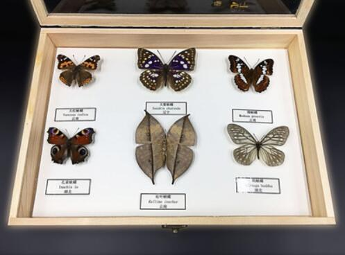 Insect specimens Butterfly specimens Biological science instrumentInsect specimens Butterfly specimens Biological science instrument