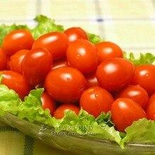 Marseed Non Hybrid 100 Red Cherry Tomatoes Vegetable Seeds Interesting Semi-Urban Garden