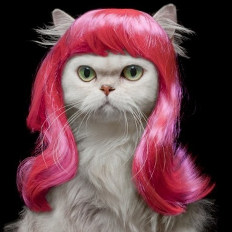 [mpk Cat Wigs] Pink Cat Wig, Pet Wig, Funny Cat Wig, Pink Curly Hair For Pets