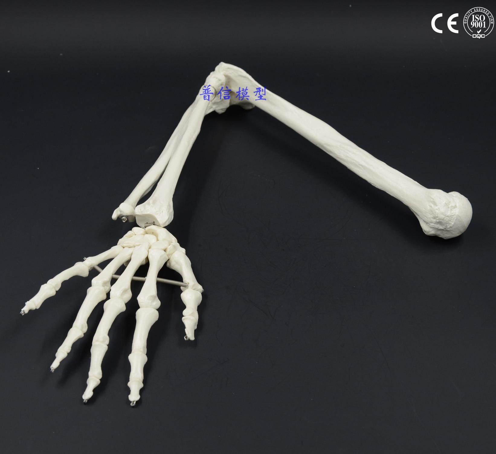 human skeleton arm reviews - online shopping human skeleton arm, Skeleton