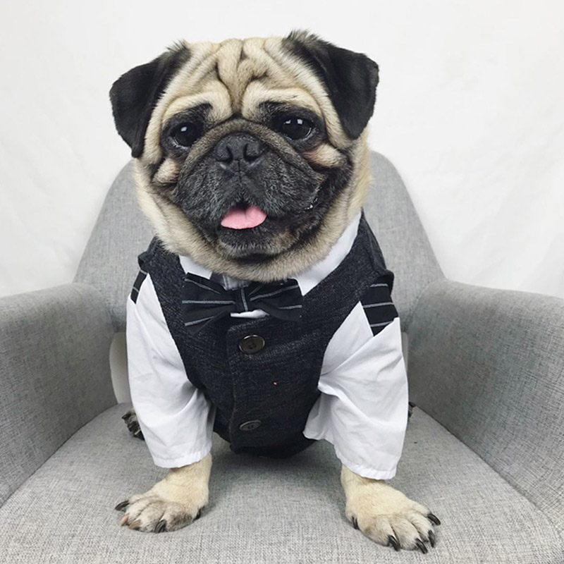 Formal Canine Garments Wedding ceremony Pet Canine Go well with Pets Canine Clothes For Canine Pets Provides XS-XXL Pet Attire Pet Outfit Pug Bulldog HTB1o3VSCh1YBuNjy1zcq6zNcXXaW