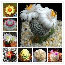 Buy  Gardening Flower Pots Balcony Flower Seeds  online