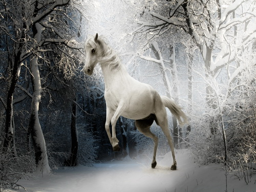 Halloween blanc cheval accessoires photo lavable polaire photographie  décors pour le studio origines de la photographie HG 400 A dans Fond de  Electronique