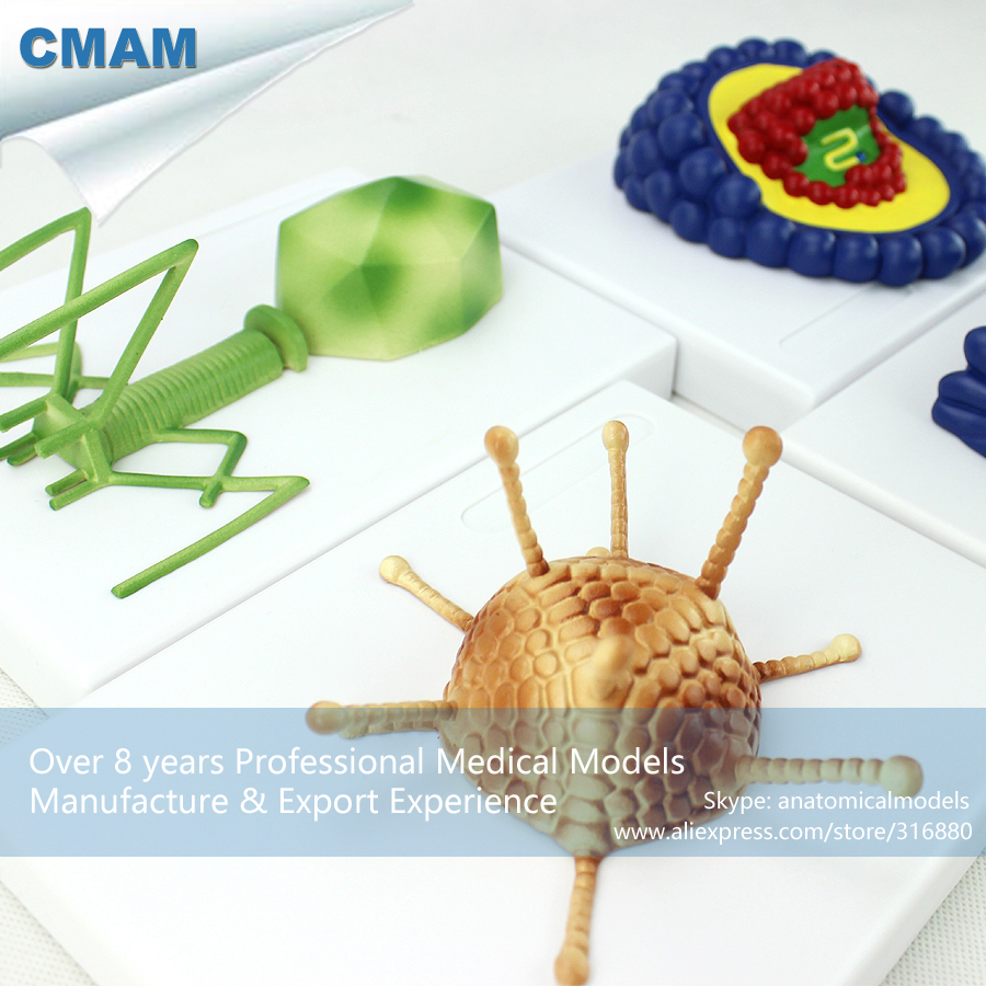 CMAM-VSW01 Microbiology AIDS Virus Model Kit ,  Medical Science Educational Teaching Anatomical Models geoffrey m gadd advances in applied microbiology 79