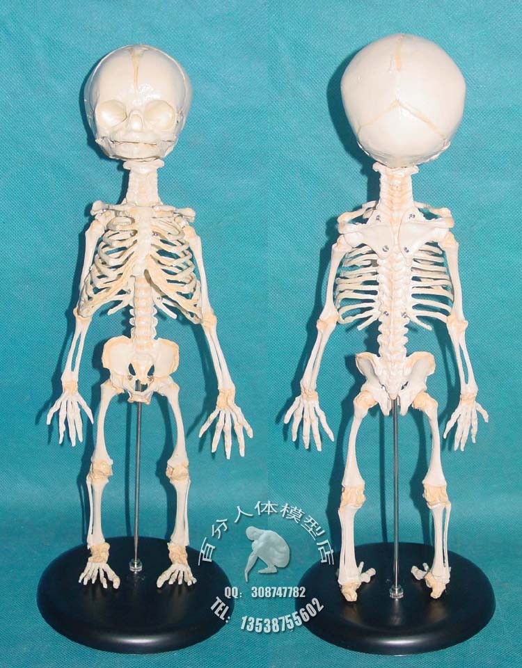 online get cheap skeleton model -aliexpress | alibaba group, Skeleton