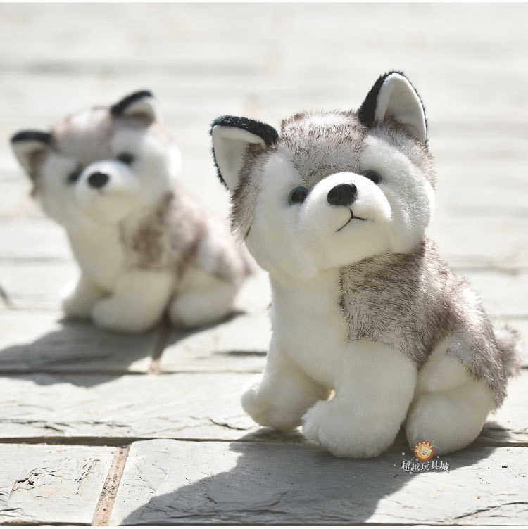 17+ Gambar anak anjing husky terbaru