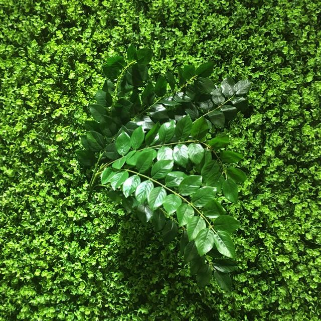 Wisteria simulation feuilles mur végétal décoration plante ...