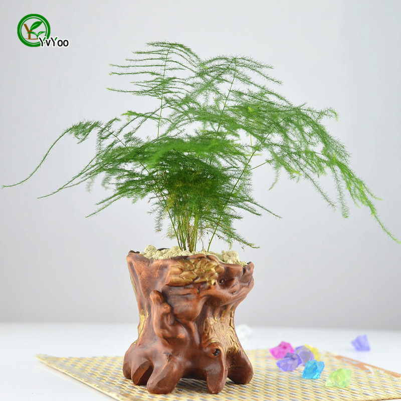 30 Potted bamboo Seeds, indoor plants flowers new arrival DIY Home ...