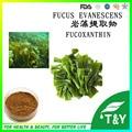 Laminaria Japonica Extrato Natural 10% Fucoxanthin 200 g/lote