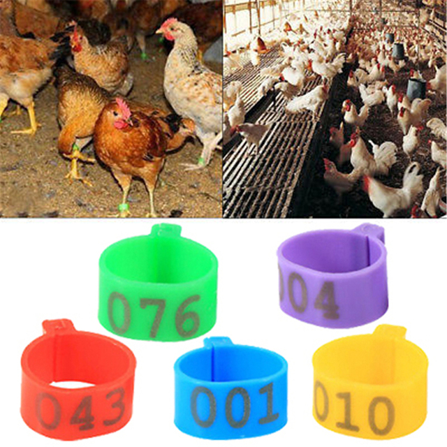 100 Pcs 1 6cm Chicken Leg Bands Chicken Poultry Rings 5 Colors Pigeon Geese  Quail Bird Ring Carry Tools Feeding Logo