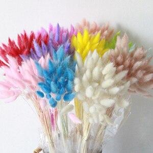 Image 5 - Ramo de flores secas naturales Lagurus Ovatus, decoración para el hogar, pascuas y bodas, hierba de cola de conejo real de color gradiente, 30 unidades por lote