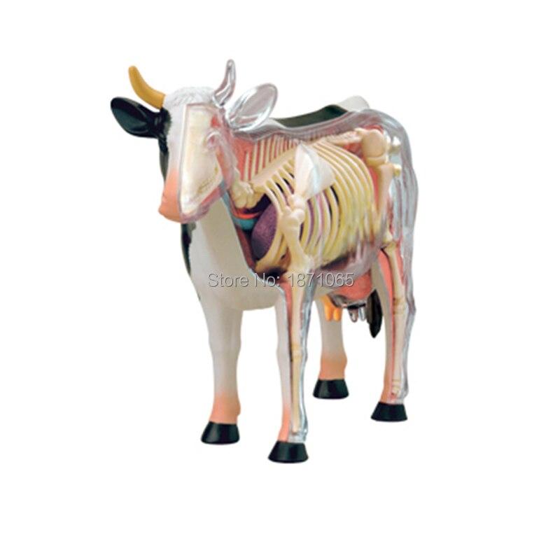 Anime 3D 4d vison caballo cerdo vaca anatomía Médicos anatómica ...