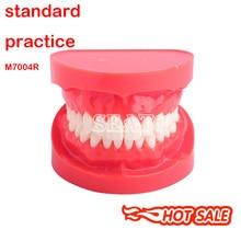 Для взрослых демонстрационная стандартная типодонт модель зубов Стоматологическая Учебная модель 7004 обучающая модель