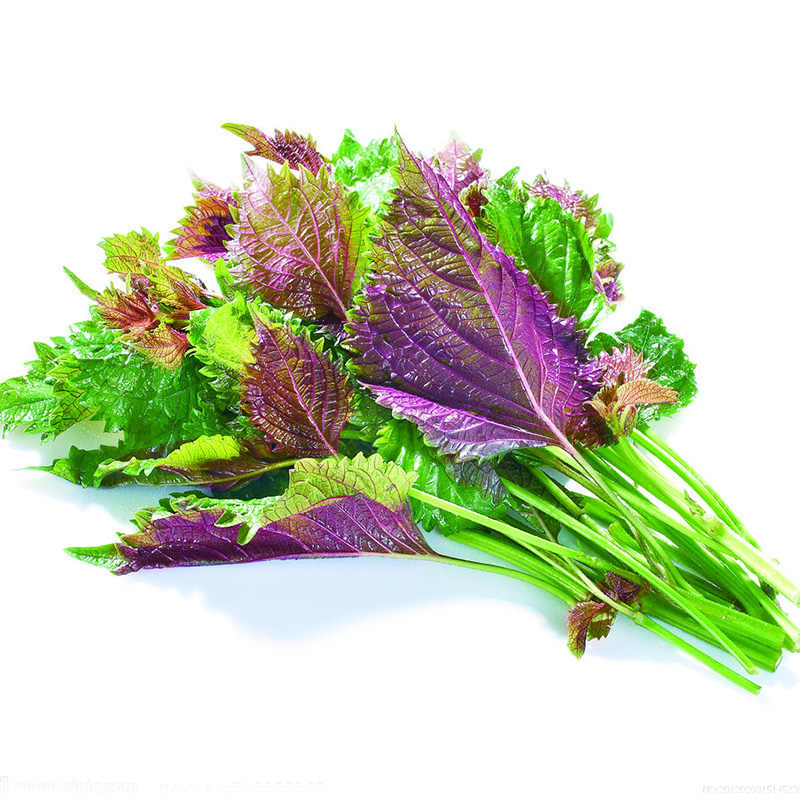 50 Pcs Purple Perilla Bonsa Vegetables Herb Shiso BonsaiTraditional Chinese Medicine Garden Flowers  Spice Vegetable Plants