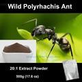500g (17.6 oz) SALVAJE Polyrhachis Ant Montaña de Hormigas Polyrhachis Vicina Roger 20:1 Extract Powder