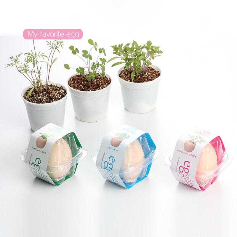 huevos planta