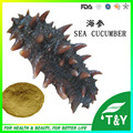 500g Natural Sea cucumber/ Trepang/ Holothurian Extract with free shipping