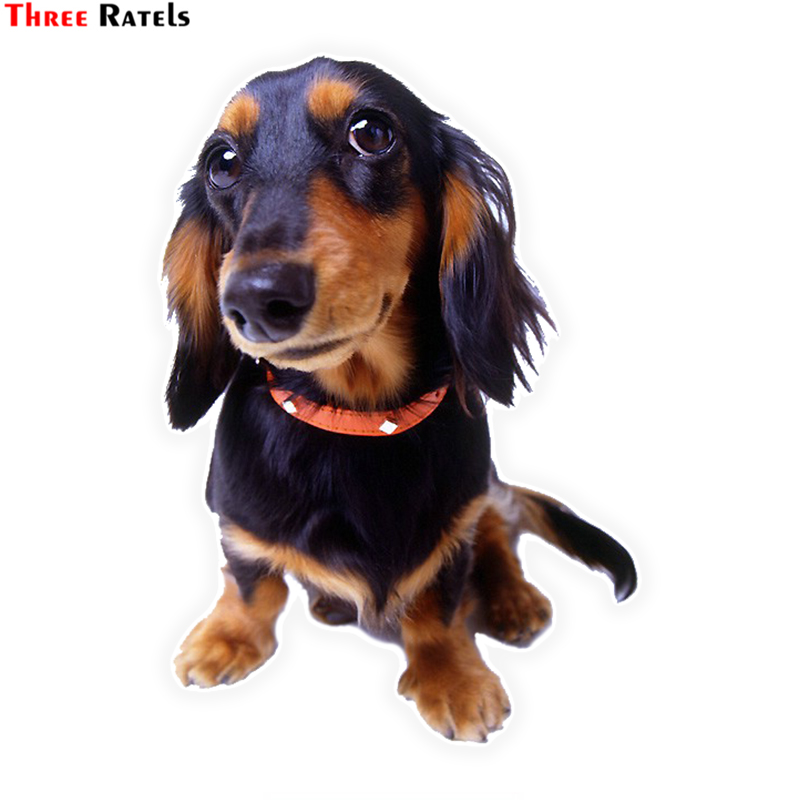 Three Ratels LCS431# 10.5x15cm Lovely Dog Car Stickers Funny Car Stickers Styling Removable Decal