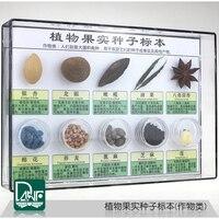 Numune bitki meyve ve tohum On çeşit bitki Bilim öğretim numune çocuk hediyeler