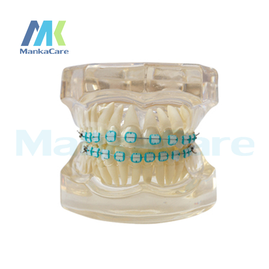 Manka Care -  28 pcs Tooth, all ceramic bracket Oral Model Teeth Tooth Model