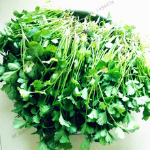 30pcs/bag Japan Leaflets Coriander Seeds Small Family Organic Vegetable Garden Seeds