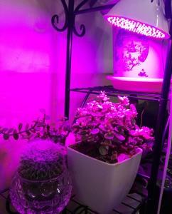 Image 5 - Volledige Spectrum Planten Groeien Led lampen Lamp Verlichting Voor Vegs Hydro Bloem Kas Veg Indoor Tuin E27 Phyto Growbox
