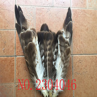 The new 50PCS natural gray eagle feathers 15 40cm (6 16 inches) collection of handicrafts, feather decoration