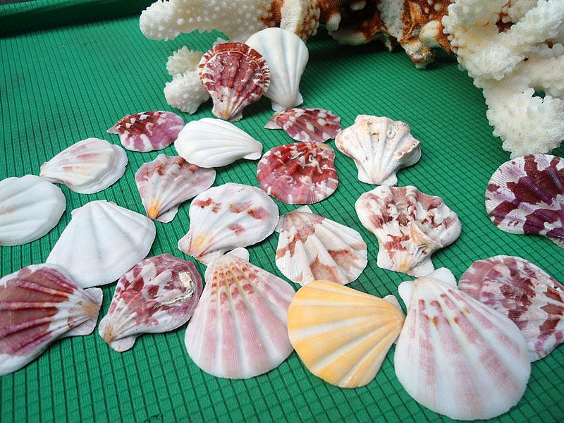 HappyKiss 5 Pcs  Natural Steamed Bread Starfish Aquarium Decorations Shells Thick Scallops Slices Conch Wall Aquarium DIY