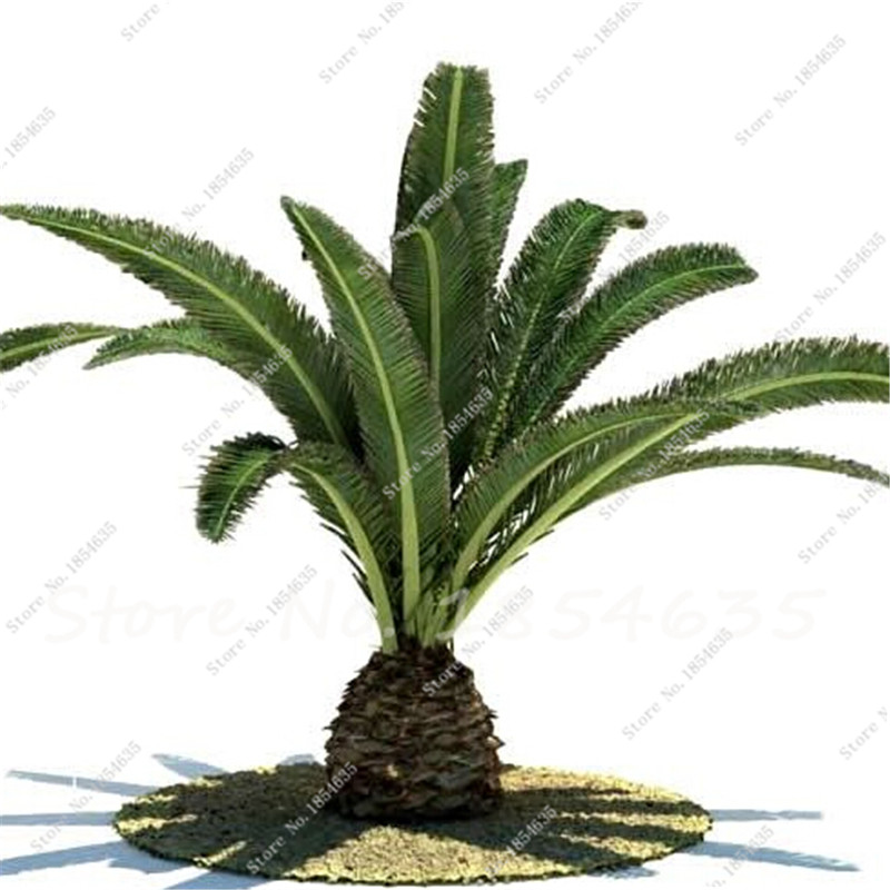 Online Get Cheap Indoor Palms Alibaba Group
