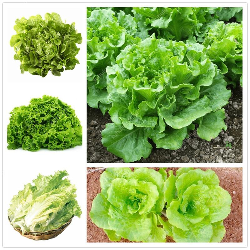 500 шт. карликовые деревья Китай салат растения хороший вкус, romaine салат, легко выращивать, вкусный салат выбор, DIY дома овощ с грядки