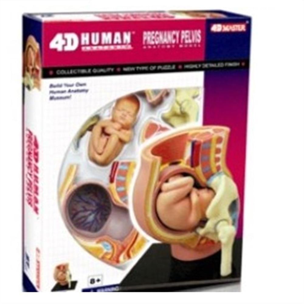 Mini Human Uterus assembly model Assembled Human Anatomy Model Gift for Children mini human hand assembly model assembled human anatomy model gift for children