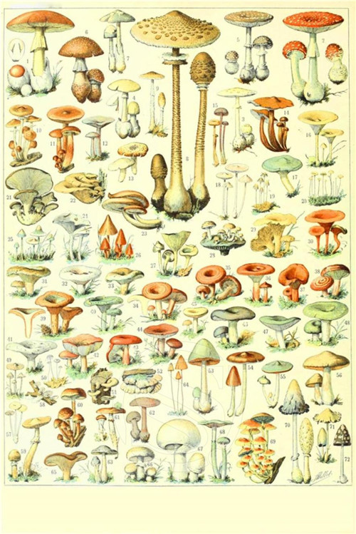 High Quality Mushrooms Poster Promotion-Shop for High Quality ...