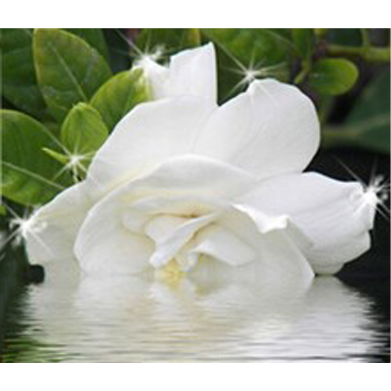 Paper Gardenia Flowers