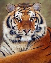 tiger full diamond embroidery,diamond painting animal,embroidery with stones,diamond