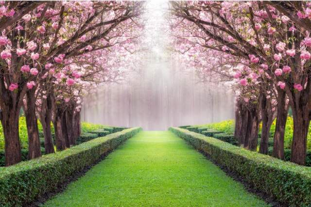 Custom 3d Wallpaper Beautiful Scenery Flowers And Trees Wallpaper