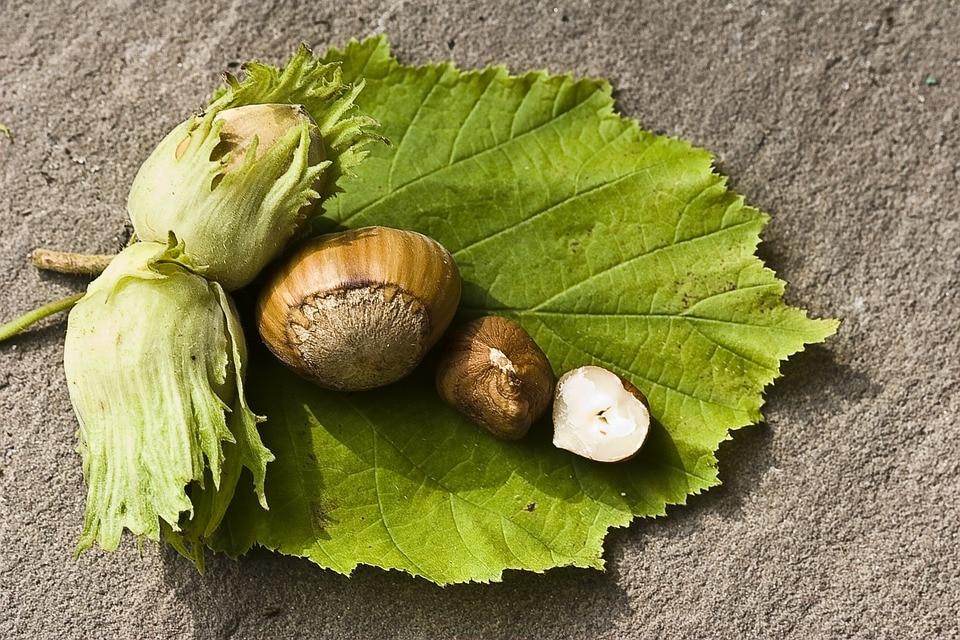 2 Pcs 100% Natural Rare Walnuts Tree Seeds Great Delicious