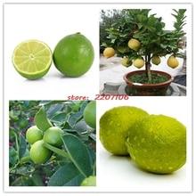 50 шт./пакет семена, известь семена, (Citrus aurantifolia), органические семена плодовых, бонсай фрукты lemon tree для дома сад
