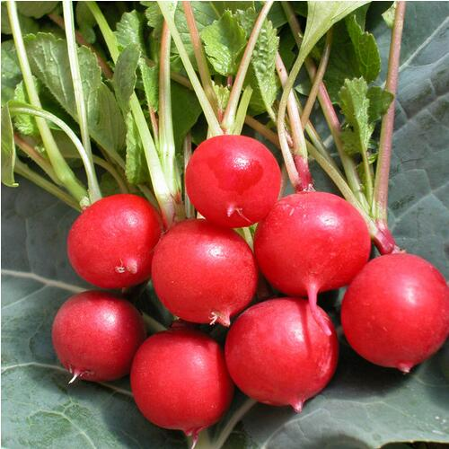 100pcs Cherry Belle Radish Seeds 100% Real vegetable seed Delicious DIY Home Garden Plant