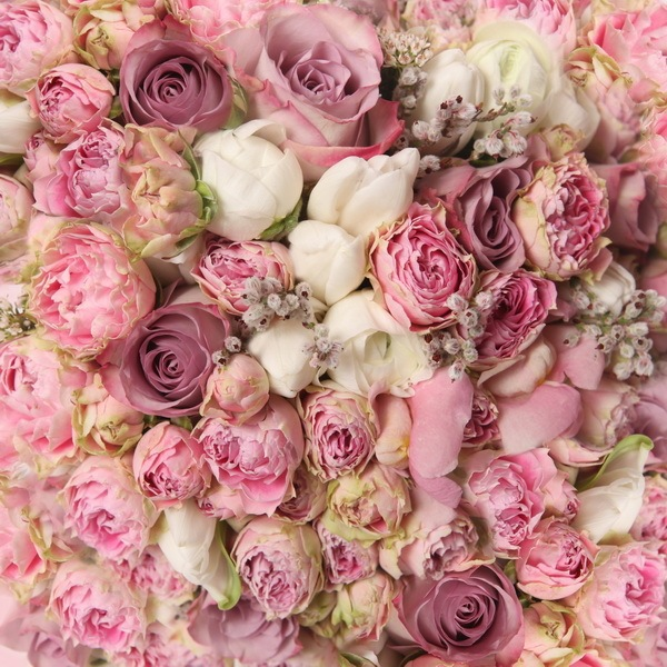 Flowers Photo Background