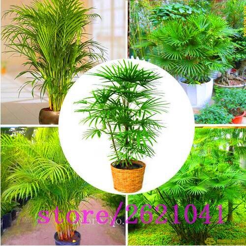 Best Live Indoor Plants Photos   Interior Design Ideas .