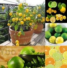 YVYOO Edible Fruit Meyer Lemon bonsai, seedsplants,Exotic Citrus Bonsai Tree Fresh plants fruit vegetable,20 pcs/bag