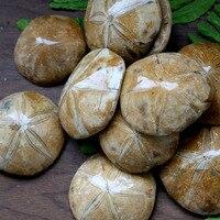 1000g JURASSIC Madagascar SEA BISCUIT URCHIN FOSSIL sand dollar Star Fish Dinosaur Age
