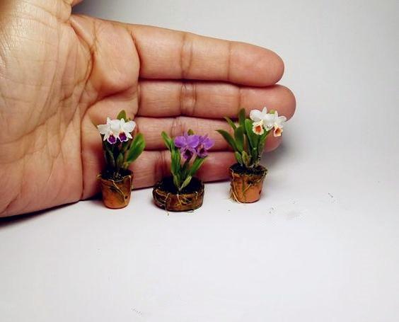20 шт. мини Орхидея Цветы для комнат семена многолетника для внутренних помещений цветы для дома и сада горшках цветы фаленопсис