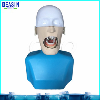 High Quality Senior Manikins Model With Torso It can be fixed on the dental chair for any position practice