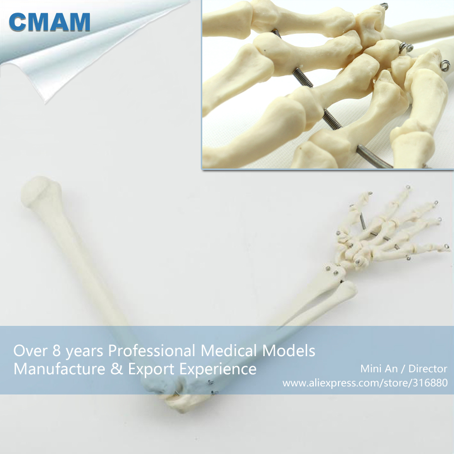 No. 12358 , Human Upper Limb Bone , Medical Science Didactic Joint and Extremities Model , CMAM china medical anatomical models no 12314 hip and femur bone model of orthopedics implantation practice cmam china medical anatomical models
