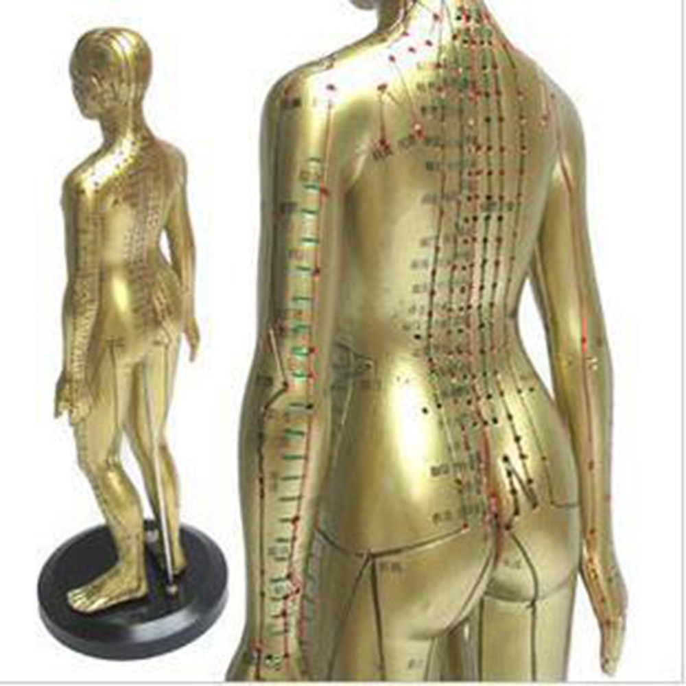 Meridian model human acupuncture point human body model 50cm Medical Education Appliances male hd hard 60 cm male human acupuncture acupoint model muscle anatomy human body acupuncture point model human acupoints model