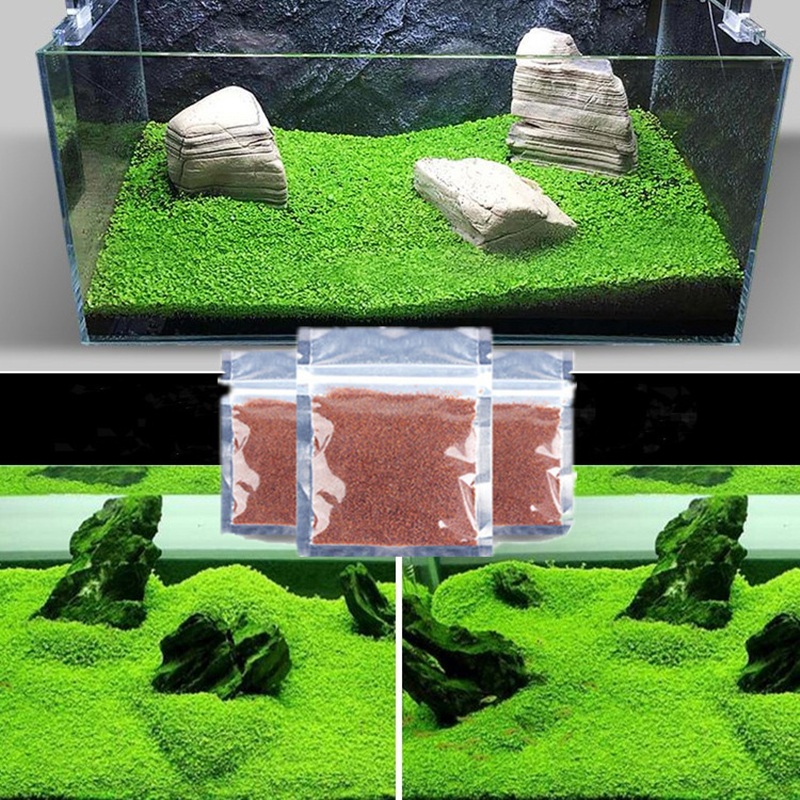 Aquarium Plant Seed Glossostigma Hemianthus Callitrichoides Easy Growing Aquarium Water Plant Grass Seed Fish Tank Lawn Decor