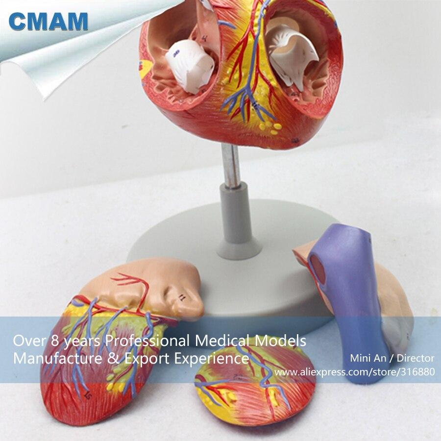 12480/CMAM-HEART04 Numerato 2x a Grandezza naturale di Cuore Umano Anatomia Modello w/4 Parti, la Scienza medica Insegnamento Anatomico Modelli12480/CMAM-HEART04 Numerato 2x a Grandezza naturale di Cuore Umano Anatomia Modello w/4 Parti, la Scienza medica Insegnamento Anatomico Modelli
